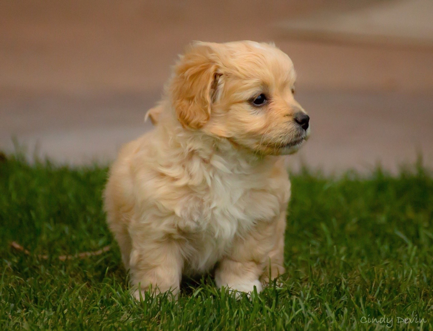 Breed Of Smallest Dogs