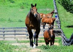 Retired racehorses are not poor keepers
